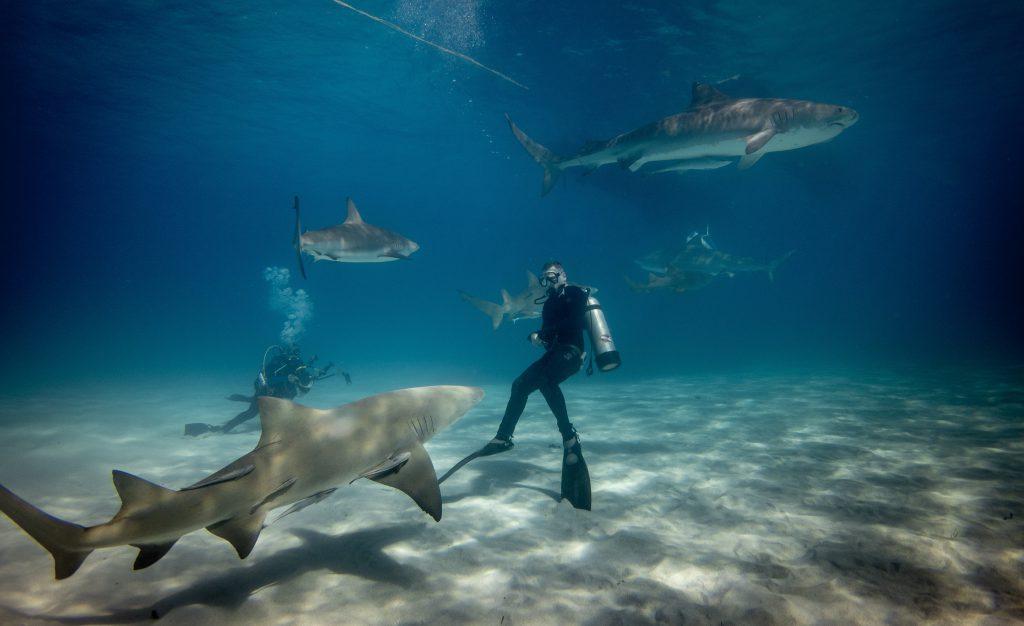 travel bucket list duiken met haaien
