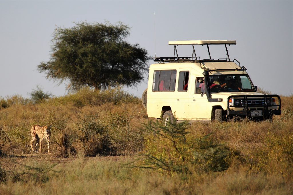 travel safari bucket list